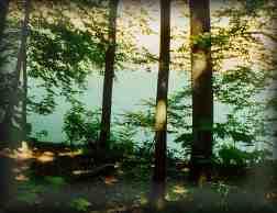 rezerwat_morasko1